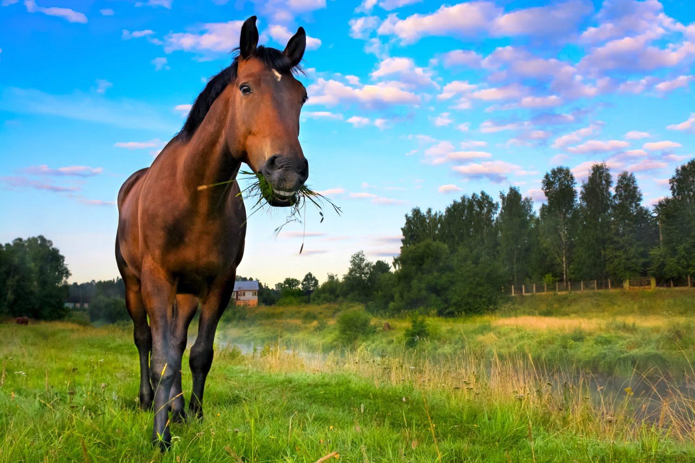 Din hest bliver hvad den spiser