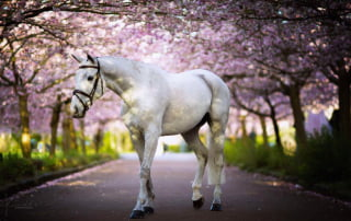 Foto: Horsegroomdenmark.com/Kunddahl Graphic & Photography