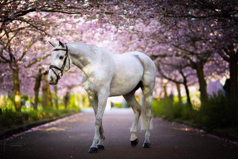 Skal man klippe sin hest om sommeren?