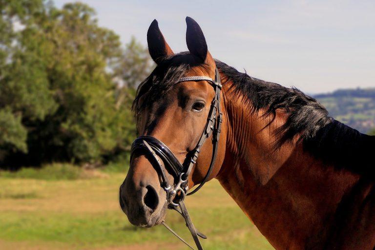 Vil du på ferie til hest? Støt turismen i Danmark