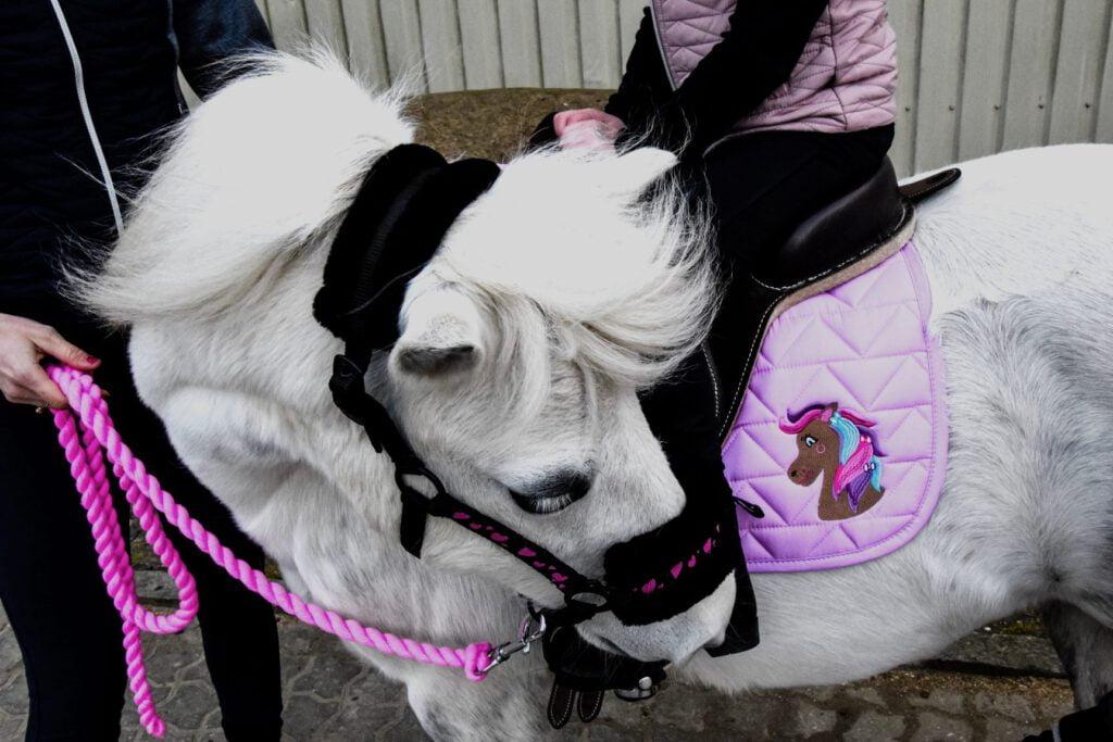 Barn sidder på sin pony