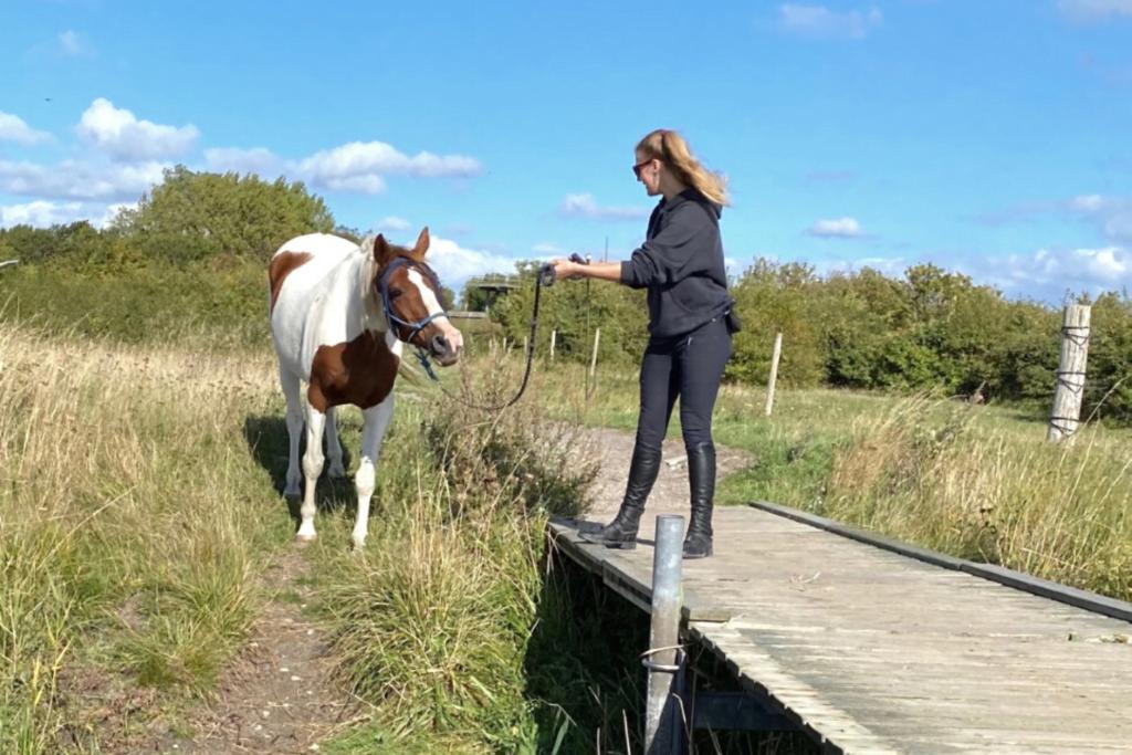 Hest og ejer på en bro og træner signaler