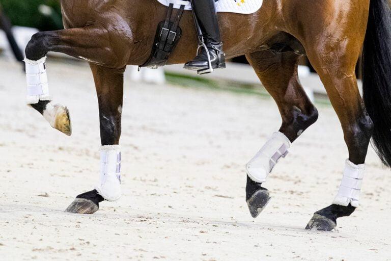 Sundheden i din hests led påvirker længden af dens karriere som ridehest
