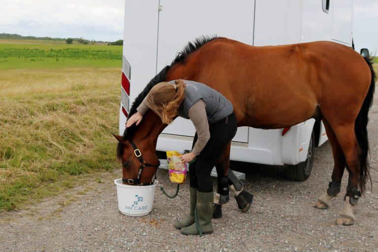 6 råd: Giv din hest en god tur på farten