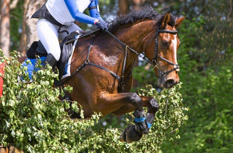 Dæk din hest ind uden stivelse