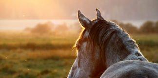 HorsePro Fiber Plus