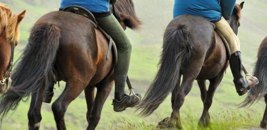 HorsePro Islænder