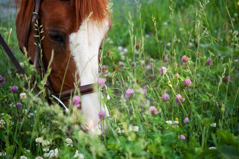 Forkæl din hest med lækre urter