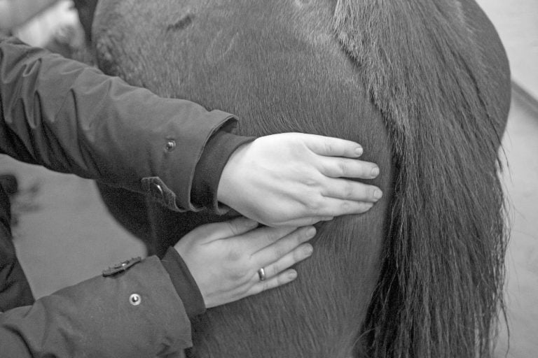 Øvelser til at styrke din hests bagpart