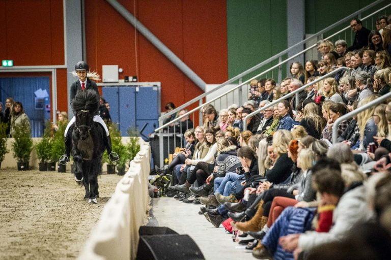 Oplev de bedste islandske heste i verden til World Toelt 2018