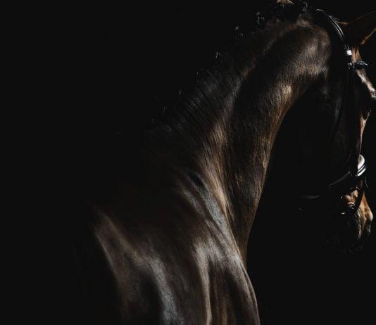 Steady Horse