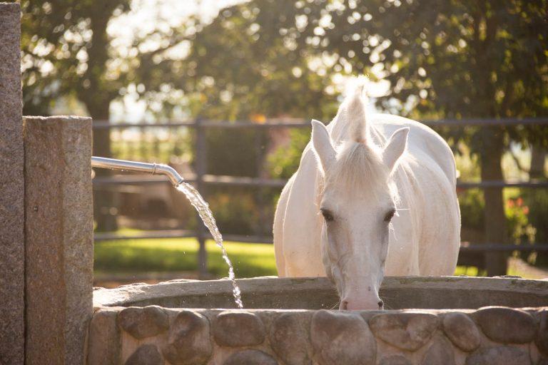 Gør din hest klar til sommer – Væskebehov