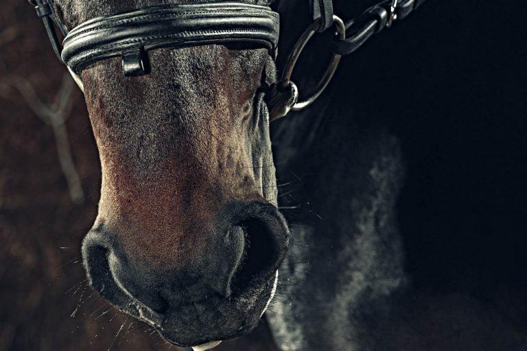 Har du lagt mærke til hvordan din hest trækker vejret?
