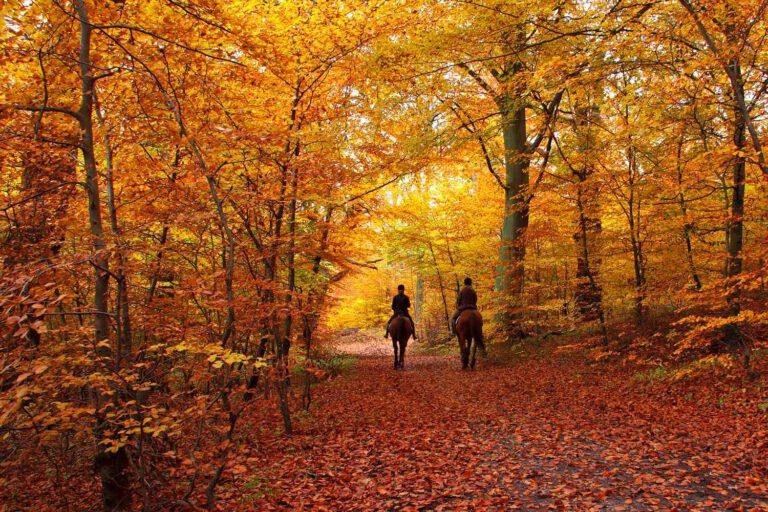 Sæt pris på efteråret