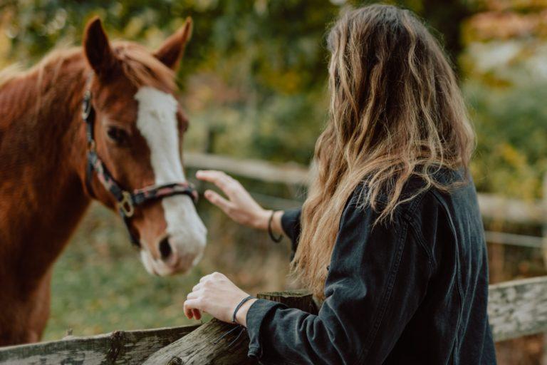 Undersøgelse: Kan din hest læse dine tanker?