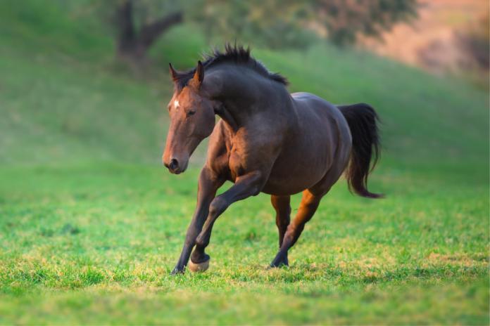 Tilskud til hest på græsfold