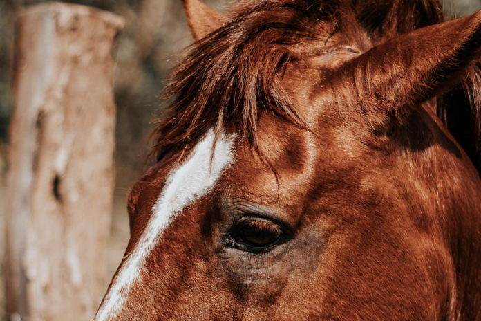 Varmestress hos din hest