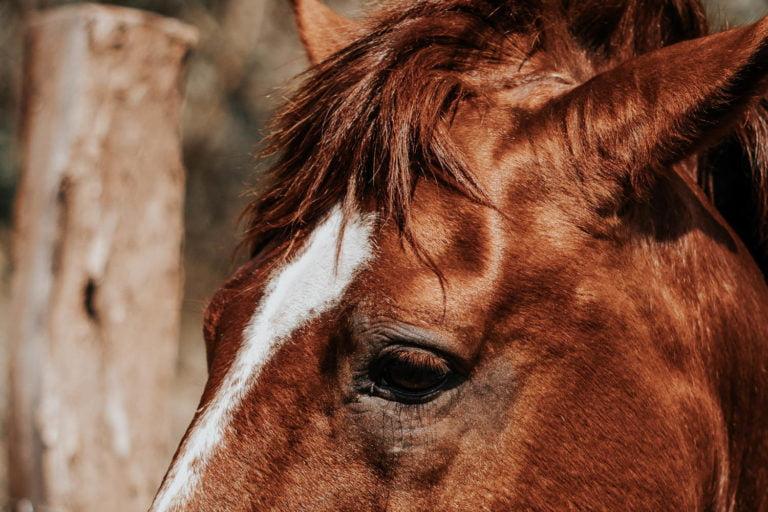 Gør din hest klar til sommer – Varmestress