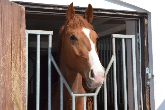 det er hverken nemt at købe en hest eller sælge en hest