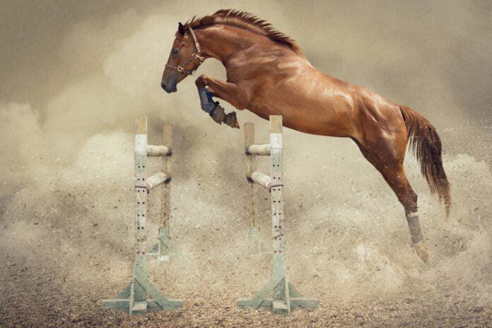 Løsspringning af hest