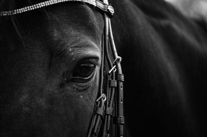 Hesteøje