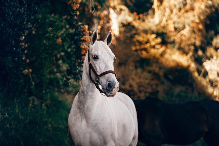 Trivsel for hesten, dig og klimaet