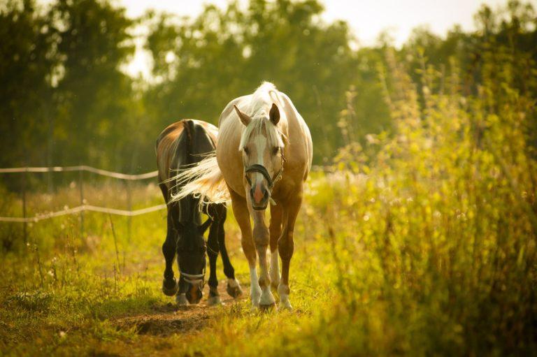 Studie påviser, at hestefolk lever længere og er lykkelige