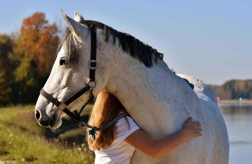 Du begynder allerede at ride din hest, når du ser den i stalden eller på folden.