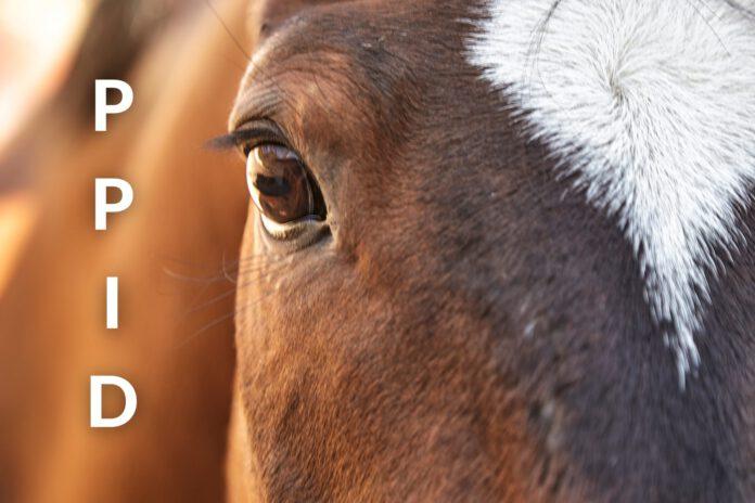 Sygdommen PPID i hestens hjerne