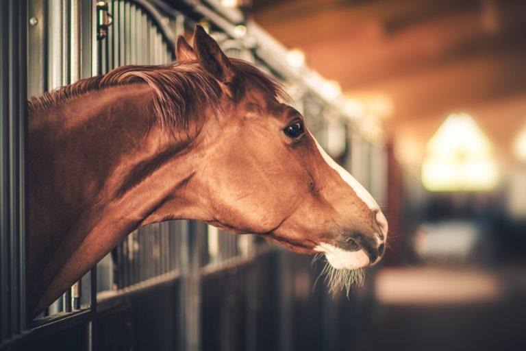 Staldklimaet har stor betydning for hestens helbred