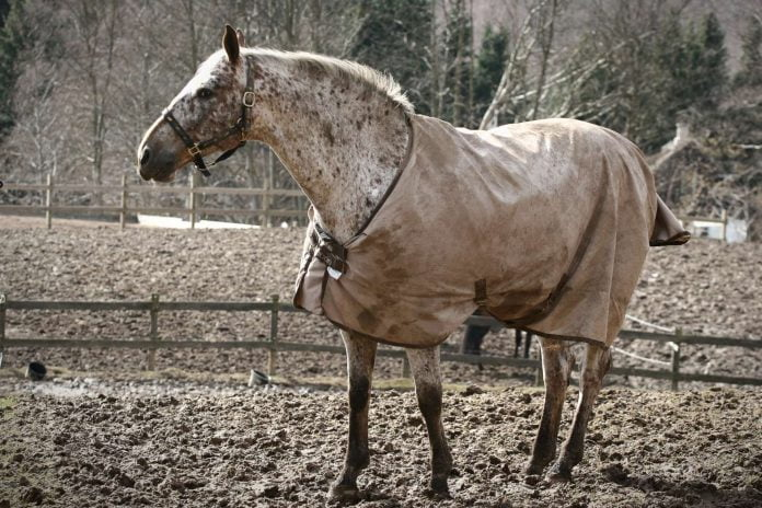 Hest på fold med mudder