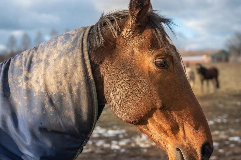 Tid til dækkenvask?: Din hests dækken er en bakteriebombe