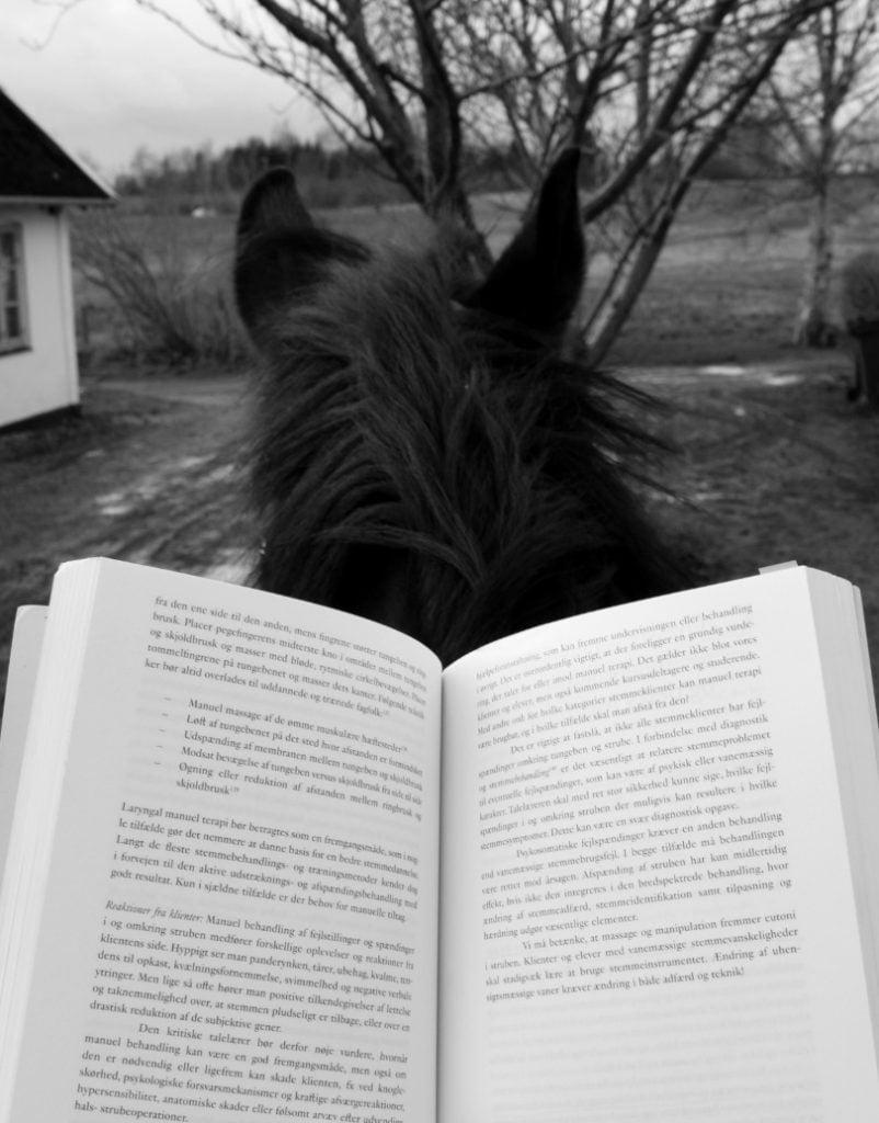 Rytter læser bog på hest