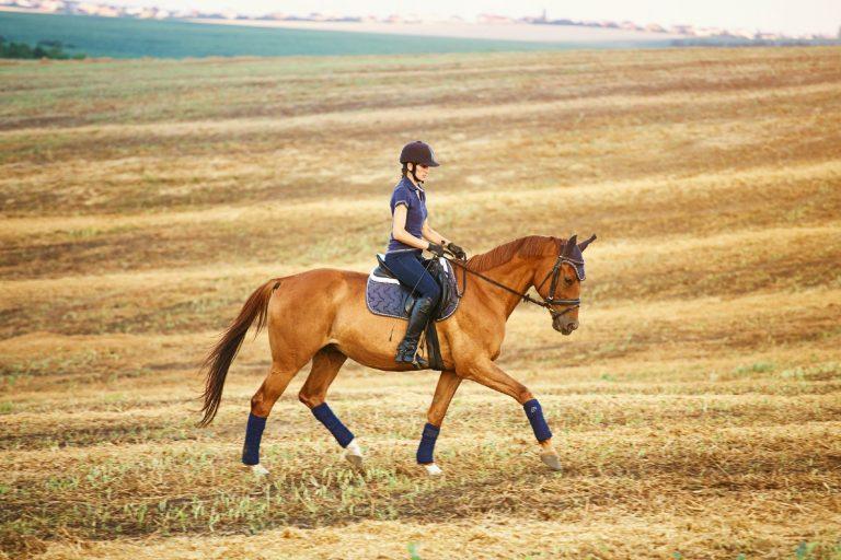 Derfor er en skovtur for hest og rytter så godt for samarbejdet på banen