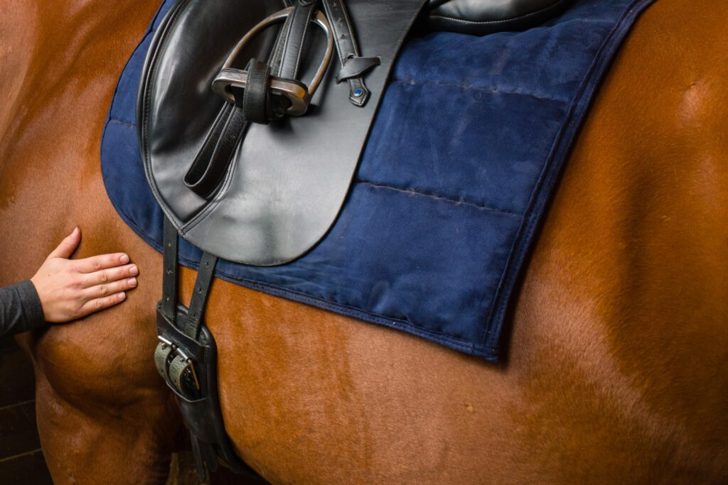 Hest med gjordkrampe