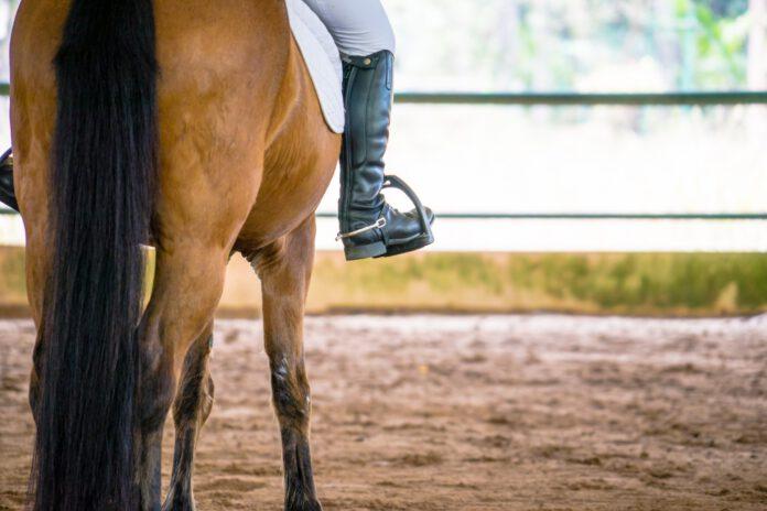 Hest på ridebane