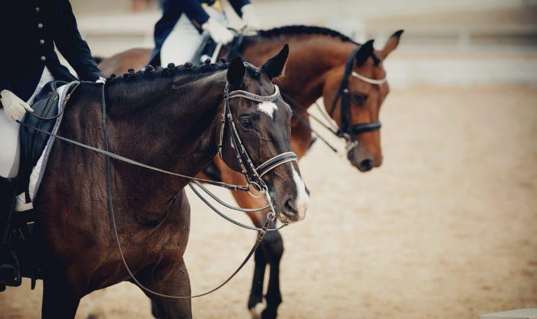 Undgå overtræning: Husker du, at give din hest pauser undervejs?