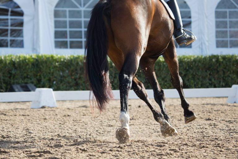 Sådan får du en selvgående hest