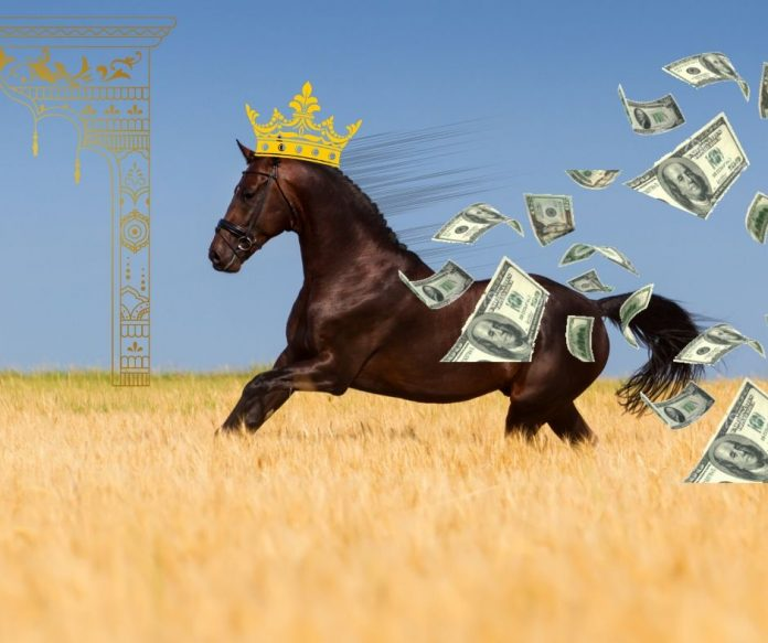 Hest løber i mark med penge