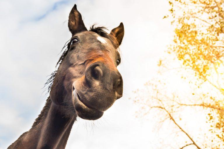 Undersøgelse: Sådan ser du, om din hest har det godt