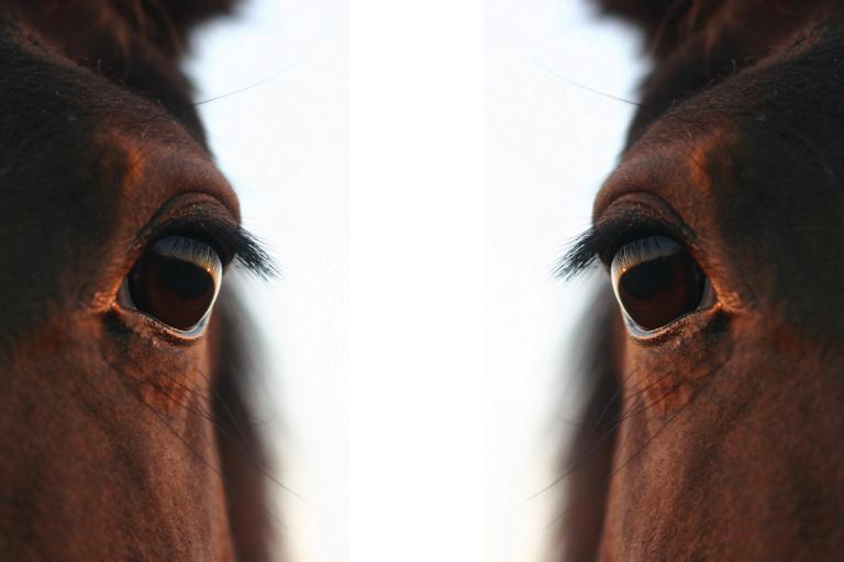 Parasitterne i din hest