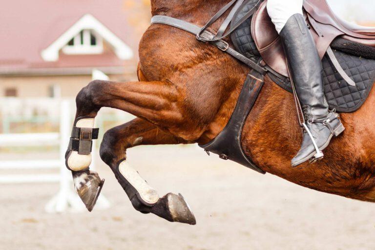 Dyrlæge: Her får heste oftest skader – og sådan undgås de