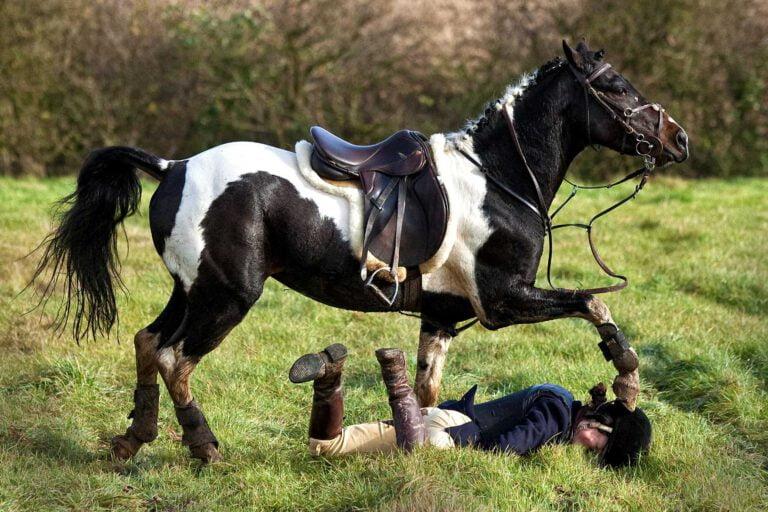 Ryttersikkerhed: Sådan falder du af din hest uden at komme alvorligt til skade