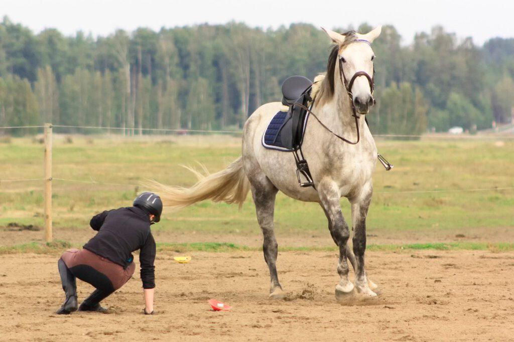 Rytter falder af hest på ridebane