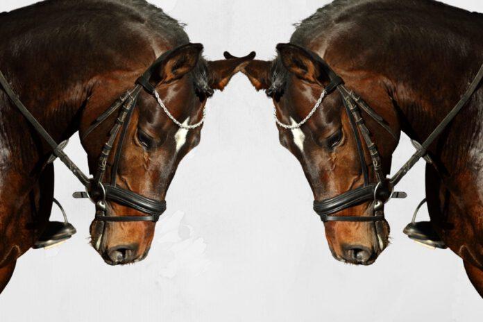 Hest med trense og tøjle
