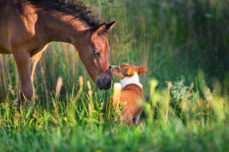 Hunden med i stalden: Undgå en dårlig oplevelse