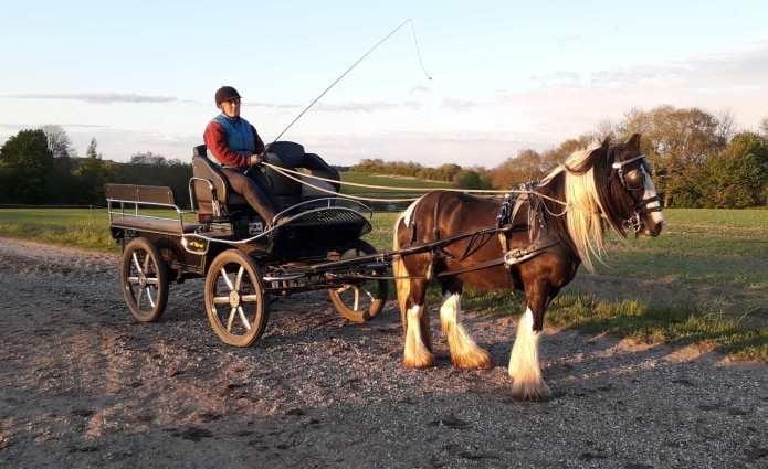 Hest for vogn.