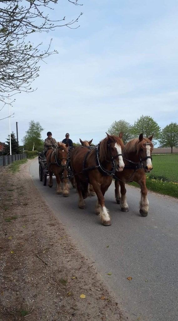 Fire heste for vogn.