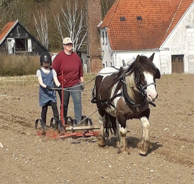 En tinker hest for vogn i marken.