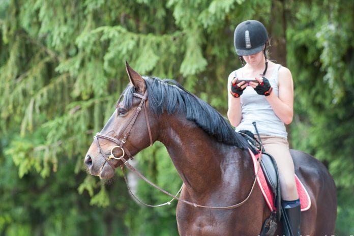Rytter sidder på hest med mobiltelefon
